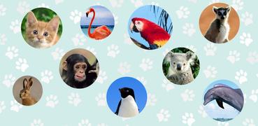Tiergeräusche. Lerne Tiere und Spiele.