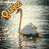Trivia Quiz Up : Animals Logic Game icon