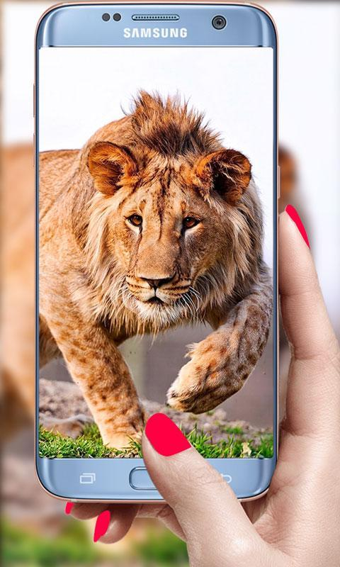 Lion Live Wallpaper 2019: 3D Real HD Background for Android