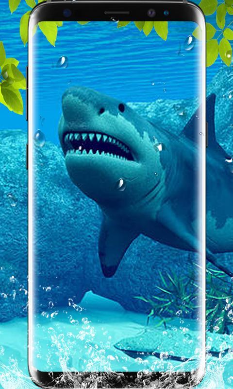 740 Koleksi Gambar Ikan Hiu Hd HD Terbaru