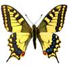 Atlas denních motýlů ČR ikona