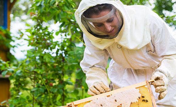 Beekeeping, Bees, Organic Honey screenshot 1