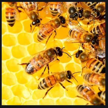 Beekeeping, Bees, Organic Honey screenshot 3