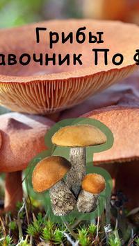 Грибы Справочник по фото screenshot 1