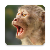 Monkey Sound Collections ~ Sclip.app icon