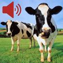 Real Animal Sounds APK Android