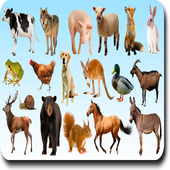 AtoZ Animal Name icon