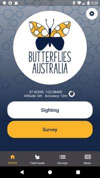 Butterflies Australia poster