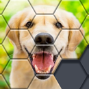 Block Hexa Puzzle - jigsaw puzzles for free APK