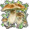 По грибы иконка
