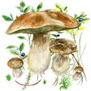 Mushrooms app APK Android