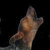 Лающая собака Звуки иконка
