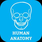 Human Body Anatomy Organ Systems icon