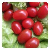 Saladas frescas icon