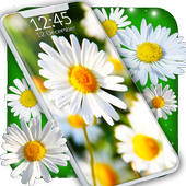 Daisies HQ Live Wallpaper icon