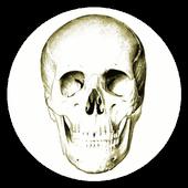 解剖学 图标