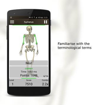 Анатомия постер