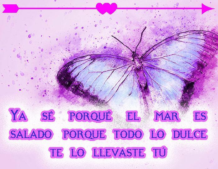 Frases De Amor Con Mariposas Pour Android Téléchargez Lapk