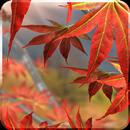 Autumn Tree Free Wallpaper APK
