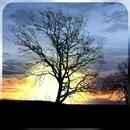 Silhouette Free Live Wallpaper APK