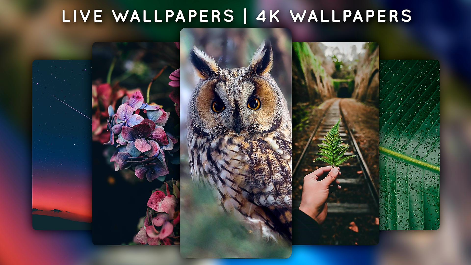Live Wallpapers For Android Apk Download