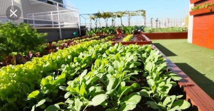 Urban garden and sowing. screenshot 1