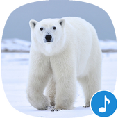 Appp.io - Polar Bear sounds icon