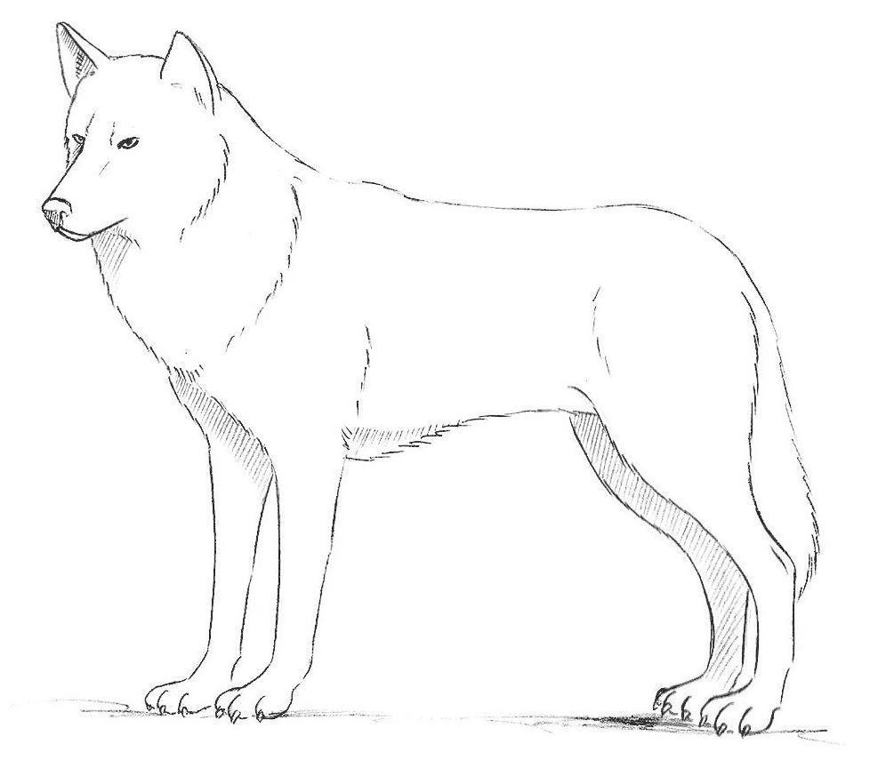 Волк картинка для детей как нарисовать
