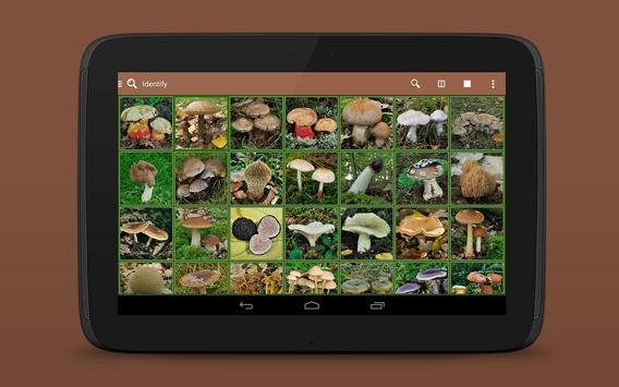 iKnow Mushrooms 2 LITE screenshot 12