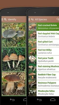 iKnow Mushrooms 2 LITE screenshot 3