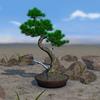 Bonsai 3D Live Wallpaper ikona