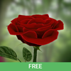 3D Rose Live Wallpaper Free-icoon