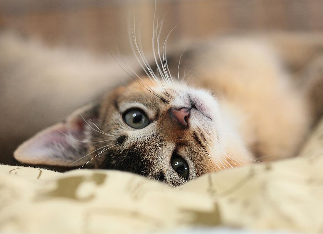 Android 用の 猫の可愛い壁紙 Apk をダウンロード