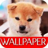 Wallpaper Dog Collection icon