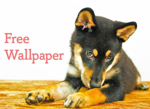 Wallpaper Dog Collection screenshot 7
