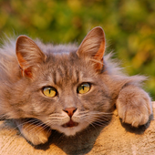 Stunning Cat Wallpapers icon
