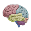 Icona 3D Brain