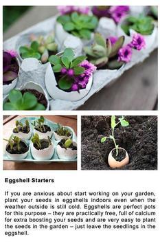 DIY Gardening Tips screenshot 2