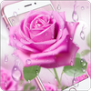 Pink Rose & Dew Live Wallpaper simgesi