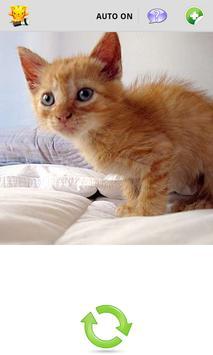 Cat Lantern poster