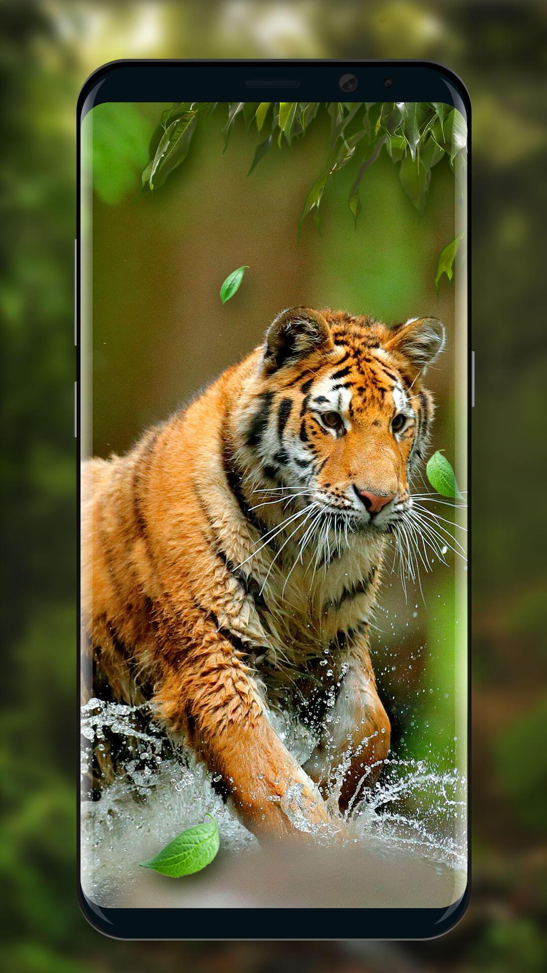 Moving Tiger Live Wallpaper For Android Apk Download