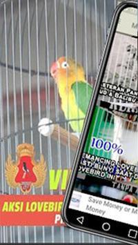 Training Kicau Lovebird Masteran Offline poster