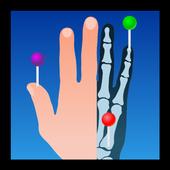 e-Anatomy v4.12.6 (Premium)