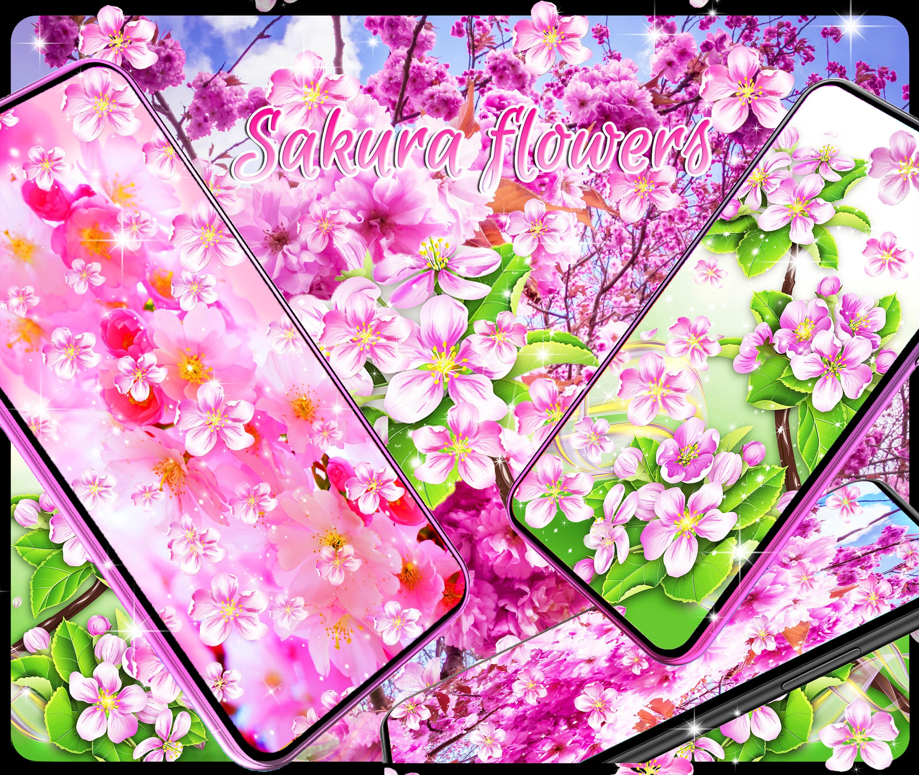 Unduh 99+ Wallpaper Android Bunga Sakura HD Terbaru
