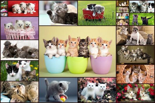 与猫的益智游戏 - 适合儿童和成人 😺 海报