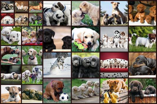 الكلاب لغز لعبة للأطفال مجانا تصوير الشاشة 10