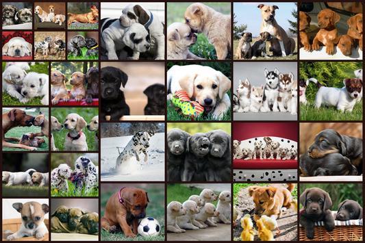 الكلاب لغز لعبة للأطفال مجانا تصوير الشاشة 5