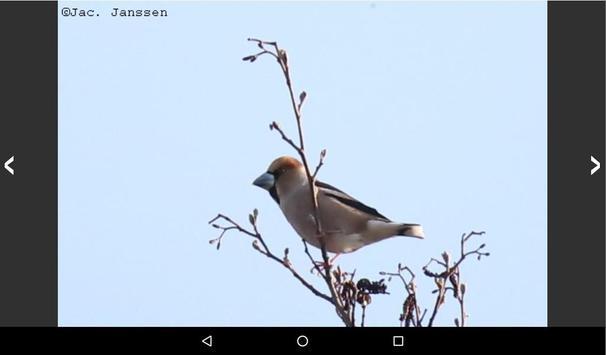 Vogels in Nederland screenshot 11