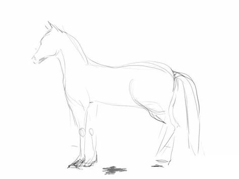 How to draw a horse screenshot 1