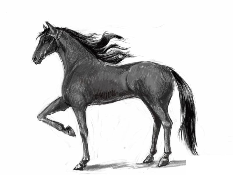 Como Desenhar Um Cavalo Realista Para Android Apk Baixar